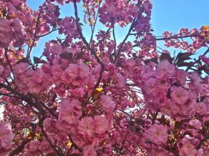 Boston Spring